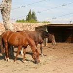 entreprise-horse-stop-drome