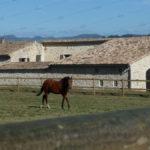 equipement-manege-parc-paddock-chevaux-drome